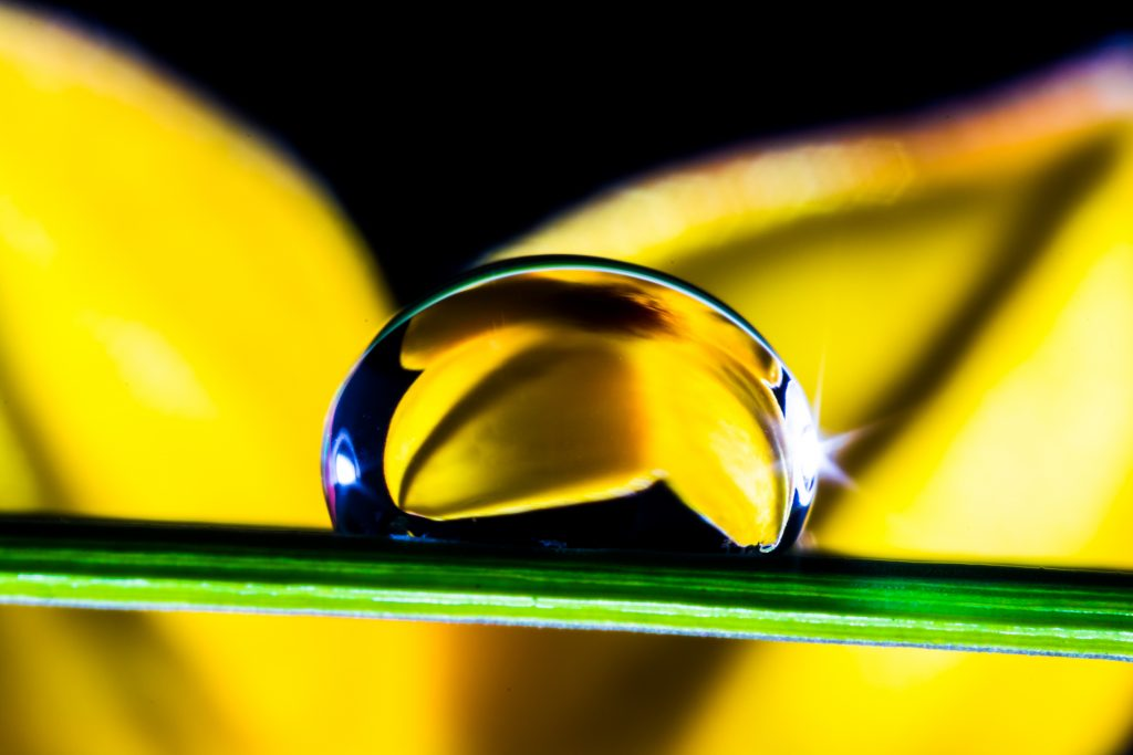 drop-of-water-drip-blade-of-grass-blossom-53563
